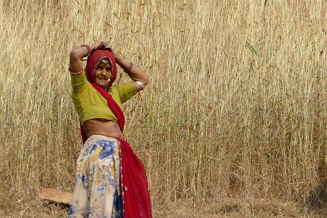 La moissonneuse indienne