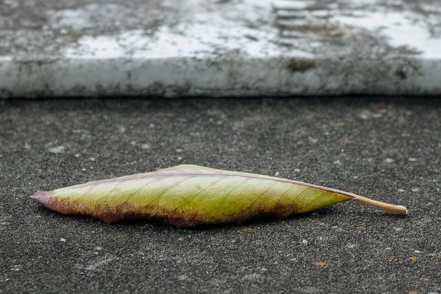 Leaf on a Vault