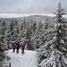 Po imisní kalamitě v 70. letech lesy znovu pokrývají jizerskohorské kopce, foto: Jan Hocek