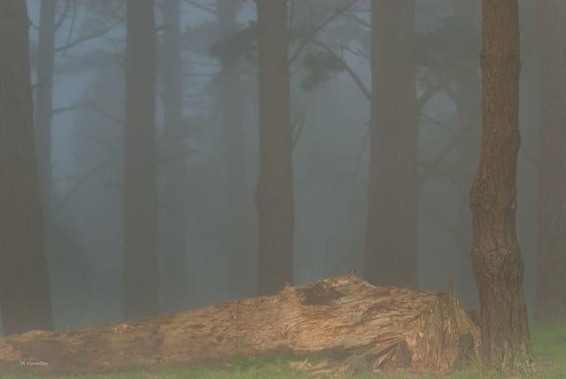 Con mucha niebla
