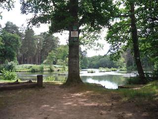 Stockbridge Pond (Private Fishing) SWC Walk 184 - Bentley to Farnham