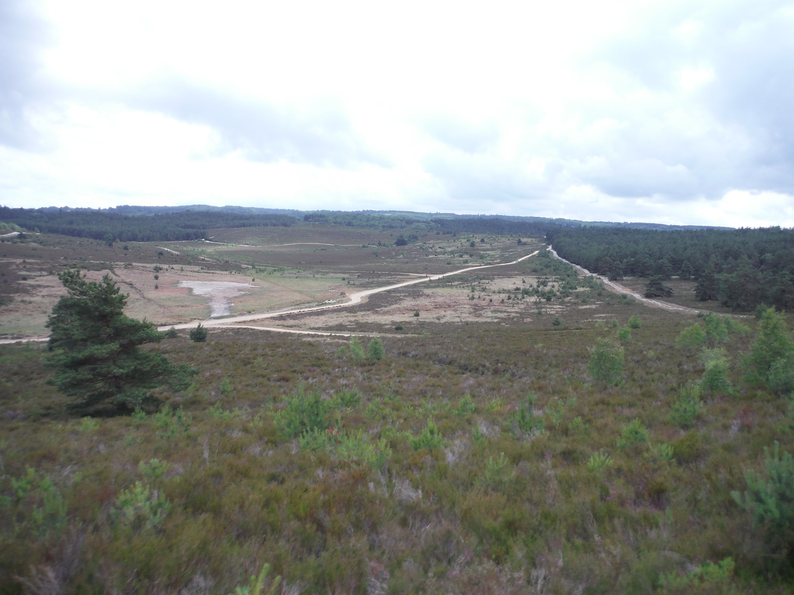 Hankley Common's core military practice area SWC Walk 184 - Bentley to Farnham