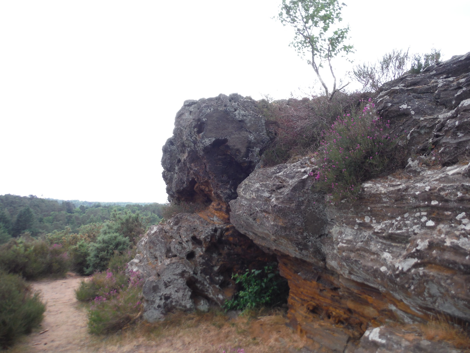Stony Jump's Ironstone Outcrop SWC Walk 184 - Bentley to Farnham
