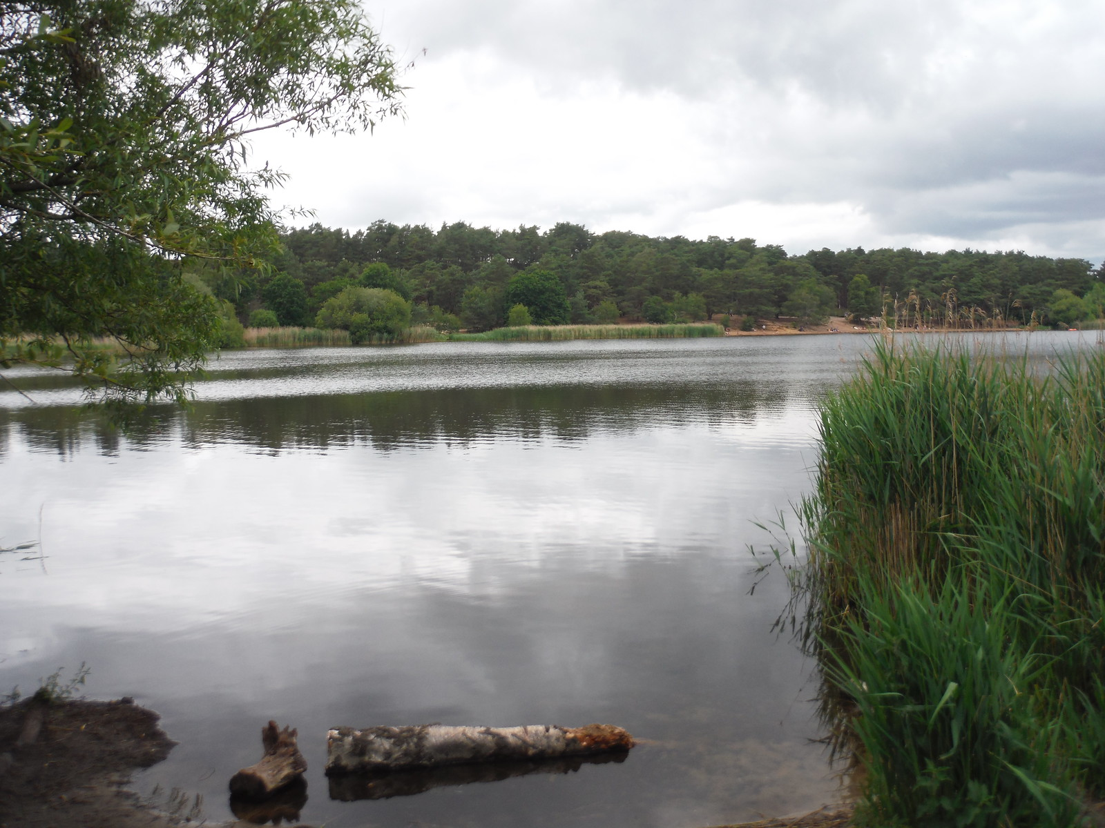 Frensham Little Pond SWC Walk 184 - Bentley to Farnham