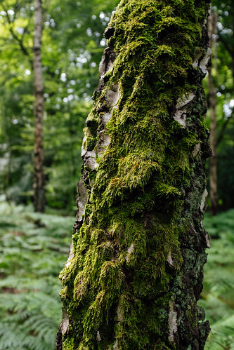 Tree Moss | by icomley