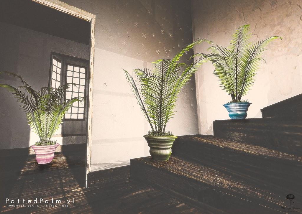 The Little Branch – Potten Palm