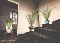 The Little Branch - Potten Palm