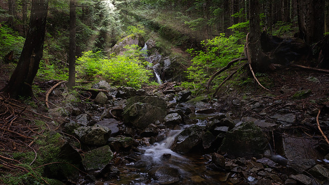 Seymour Rain Forest (Explored)
