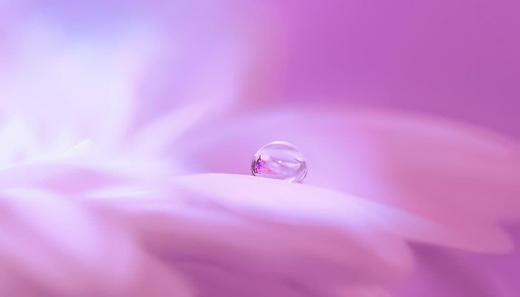 des-bulles-de-savon-avec-du-pollen-pour-fertiliser-les-fleurs