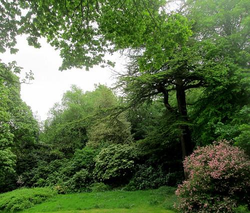Balbirnie,  trees