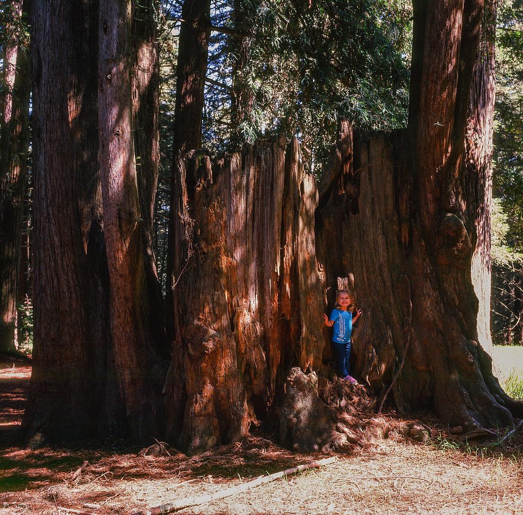 Mt. Madonna County Park, Watsonville, California