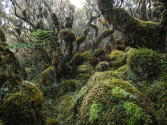 Dans la mousse, Bébour, La Réunion