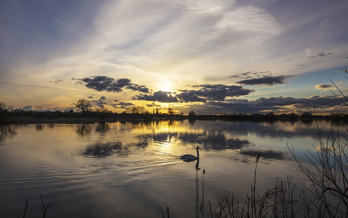 canon6d landscape nature outdoors outside lake water sunset sun clouds sky colour swan uk cambridgeshire