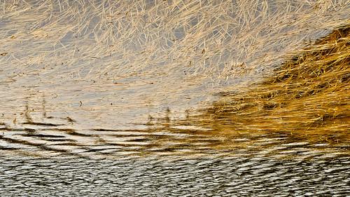 eechillington nikond7500 viewnxi corelpaintshoppro utah hiking water reflections landscape lakemartha brightonlakestrail bigcottonwoodcanyon impressionistic explored