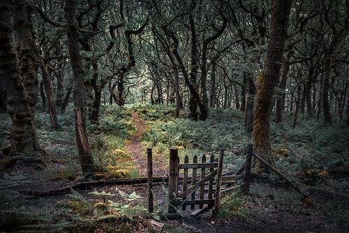hff happyfencefriday padleygorge grindleford derbyshire gate fence trees forest creepy pixie peakdistrict netting wire covid coronavirus