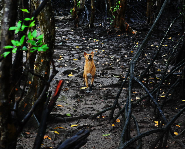 ,, Rocky, Mangroves ,,
