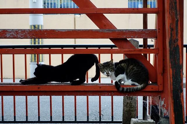 Today's Cat@2020ー06ー18