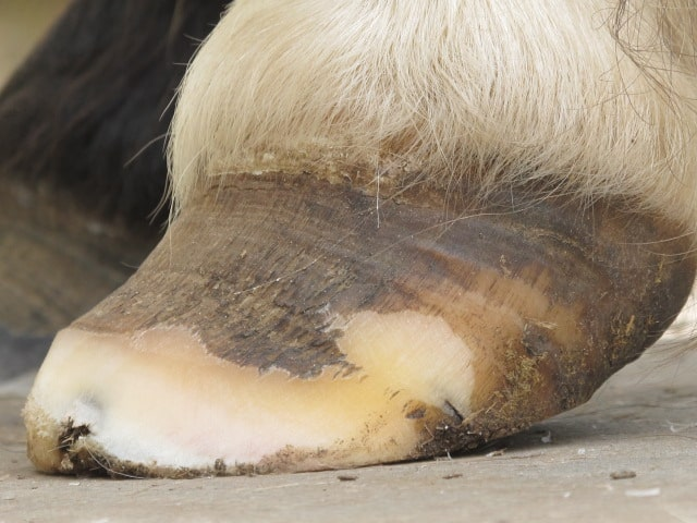 Hampshire Hoofcare - Barefoot Shoeing