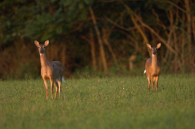 The Search for Genetic Clues to Determine Chronic Wasting Disease Susceptibility – News Release
