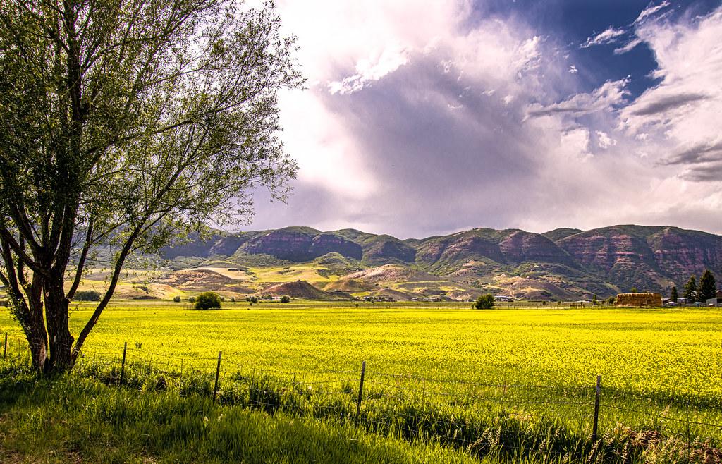 Amazing Fields IMG_9883