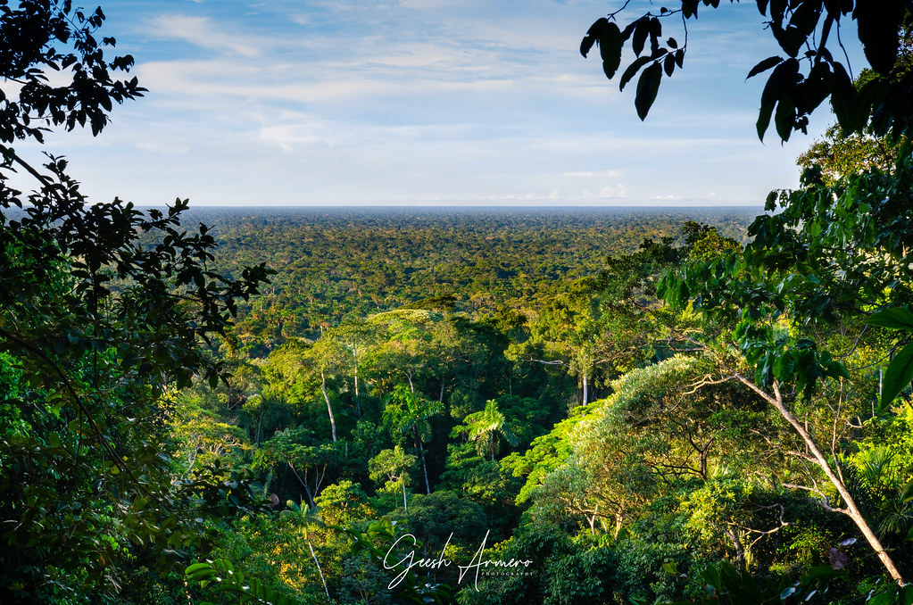 Jungle and rainforest view in Bolivia