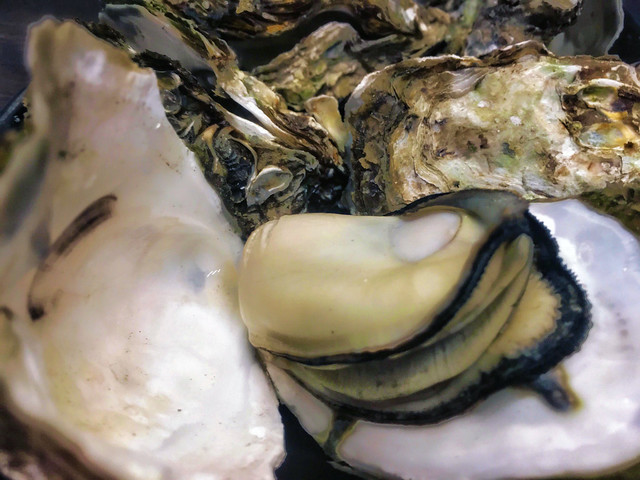 Grilled Oysters 烤蚵仔 from Lehua Night Market 樂華夜市 in New Taipei