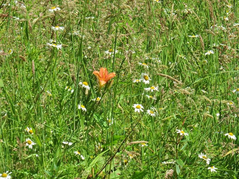 Flowers along the Estacada Lake Trail