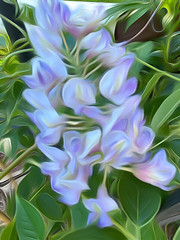 Wisteria painting effect