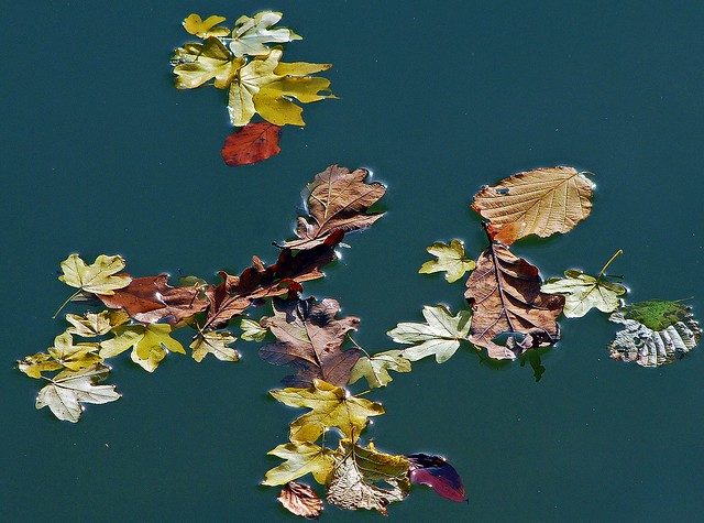 Leaves on the Water (3)