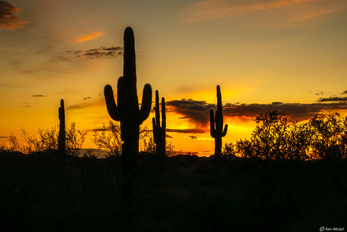 arizona cacti cactus desert estrellla goodyeararizona kenmickelphotography landscape outdoors plants saguaro sky sunsets backlighting nature photography silhouette silhouettes sunset goodyear unitedstatesofamerica