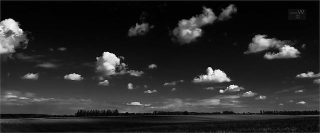 Poppy field landscape.