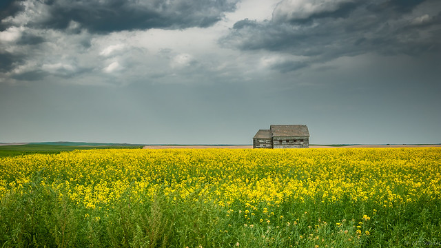 Prairie solitude...social distancing never looked so good.