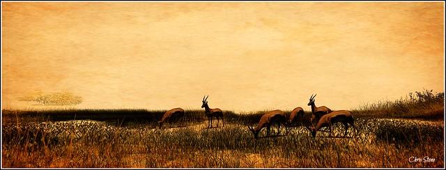 African Plains III
