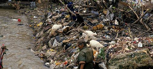 Degradacion ecologica