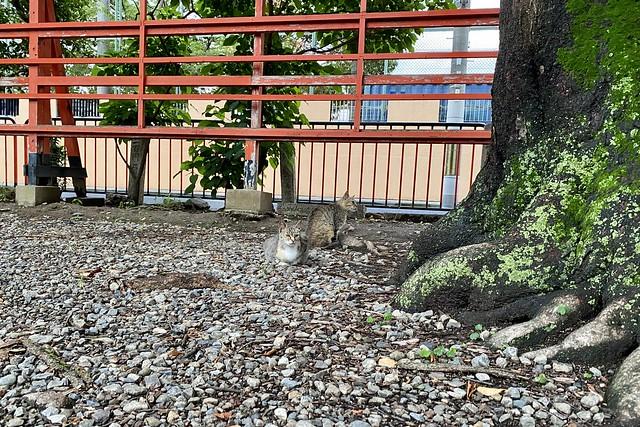 Today's Cat@2020ー06ー19