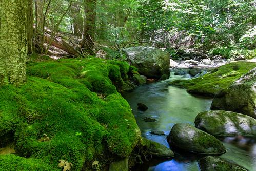 green nature stream brook outdoor outside landscape massachusetts willardbrook canon canon6dmarkii