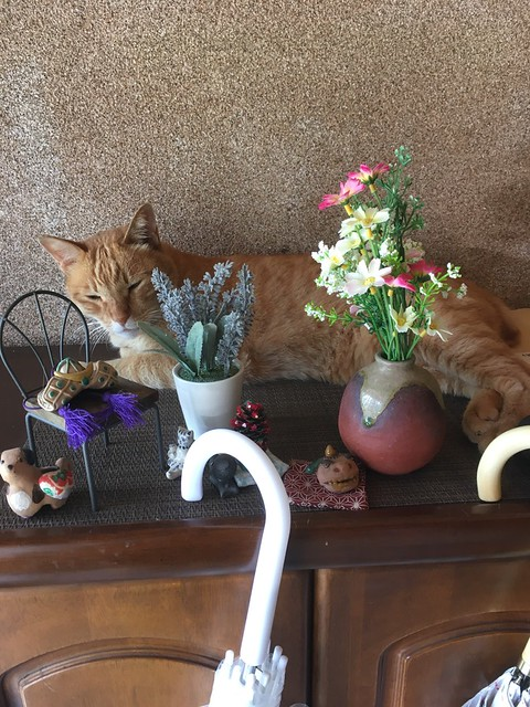 6月の猫たち