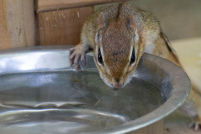 Take a tip from Short Tail - Stay Hydrated