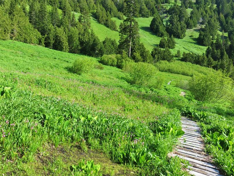 Echo Basin Trail