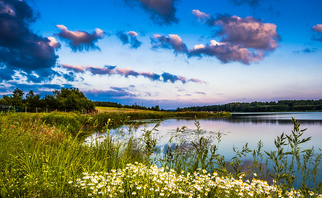 Daisies lagoon