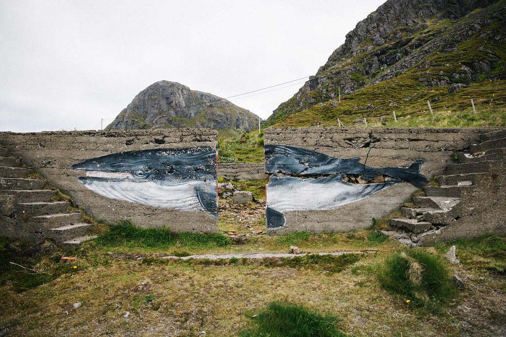 Stø valassafari - Arctic Whale Tours Vesterålen