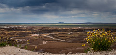 Nature's Beauty in the Petrified Forest National Park