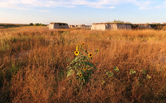 Do you like SUNFLOWERS IN PRAIRIES WITH SMALL BUTTES AT SUNSET?!