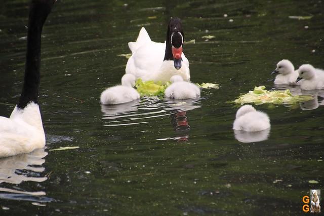 Besuch Tierpark Friedrichsfelde am 06.06.2020
