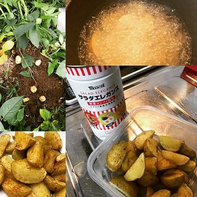 試し掘りしたジャガイモをフライドポテトにし、高校生の時に夢だったファミマのコンソメポテトをアホほど食うを実現しました。
