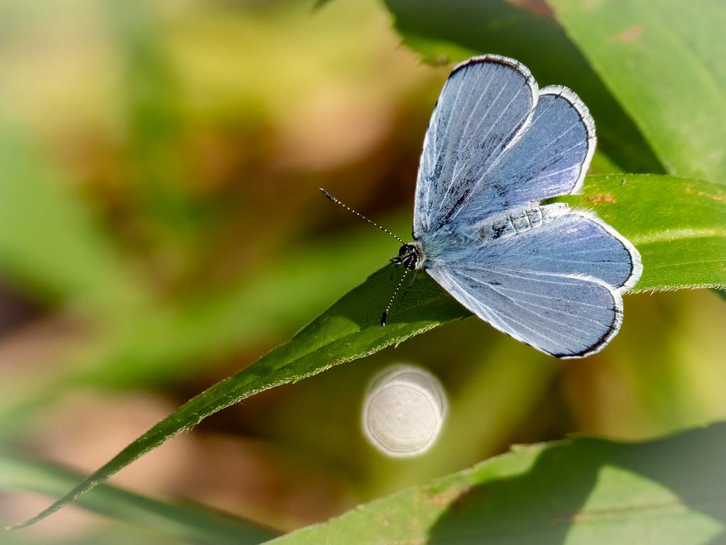 Comme une fleur bleue... 50025857488_fd0b1838a2_b
