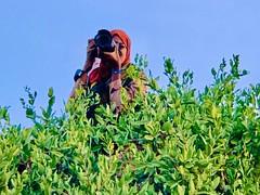 Somalia #somalipeople hanolaato #somalia #Somaliland #jubaland #puntland #Mogadishu #Hargeisa #SomaliBoy #Somaliboys #Somalimen #Somaliman. #Somaligirl #Somaliwomen #Somaliwoman #muslim #islam #africa #african #eastafrica
