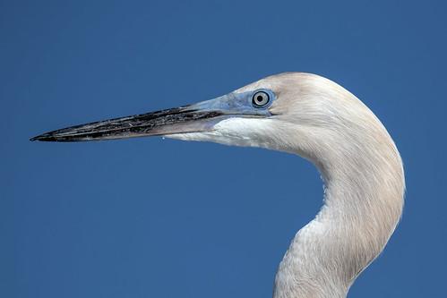 outdoor seaside dennis adair sky water nature wildlife 7dm2 7d ii ef100400mm canon florida bird