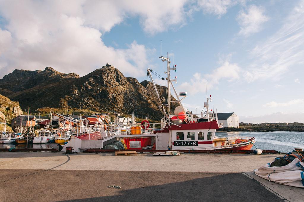 Arctic Whale Tours: Lofootit valassafari