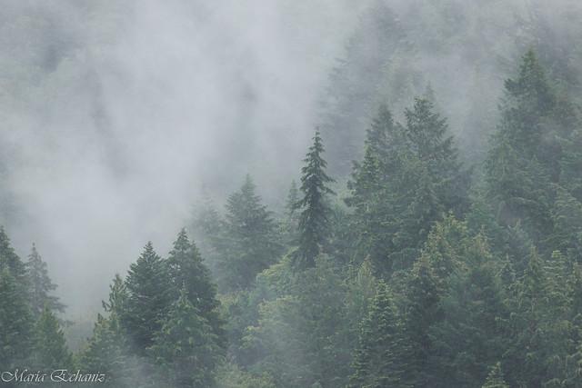 Foggy morning (explored on 21-Jun-20)